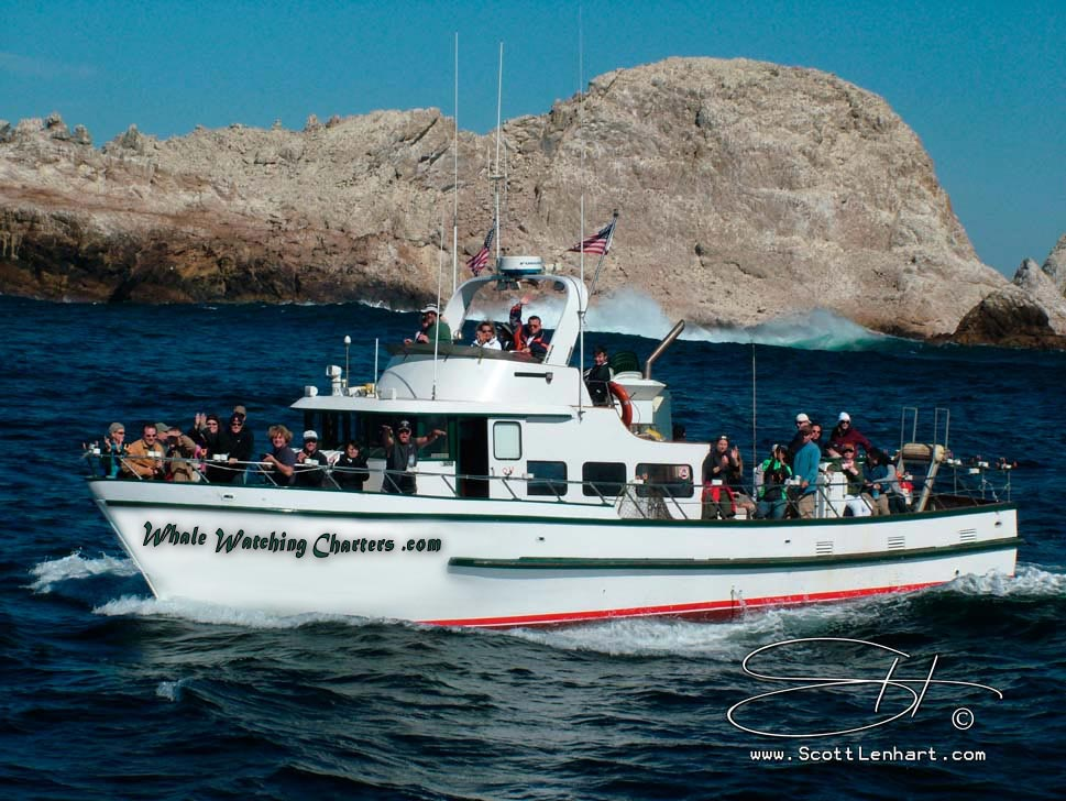 Whale watching charters for the greater san francisco bay for Charter fishing san francisco